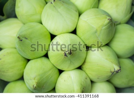 Green  lotus in background - stock photo