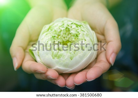 green lotus petal decorated in hand with  lens flare. - stock photo