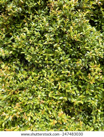 Green lush foliage for tropical vegetation backgrounds - stock photo