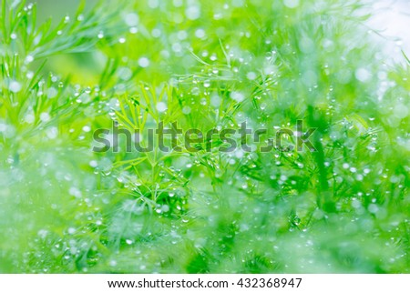 Green macro dill background with dew drops in the morning garden bed