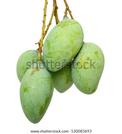 green mango fruits (Mangifera) isolated on white background