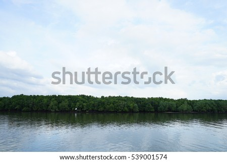 Green mangrove forest in the sea with blue sky clouds.