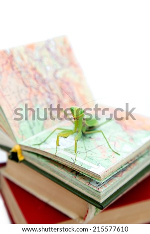 Green mantis on an old book, close up, selective focus. Mantodea, Mantopter. Concept of education, student life.