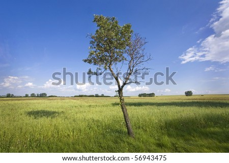 Green Meadow and lonely tree against blue sky