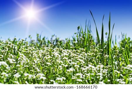 Green meadow and sun - stock photo