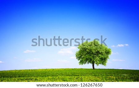 Green meadow and tree - stock photo