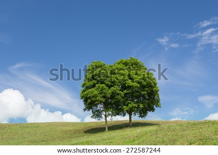 Green meadow and tree with blue sky and could.