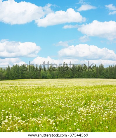 Green meadow blue sky with clouds and edge of forest - stock photo