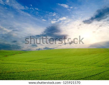 Green meadow. Composition of nature