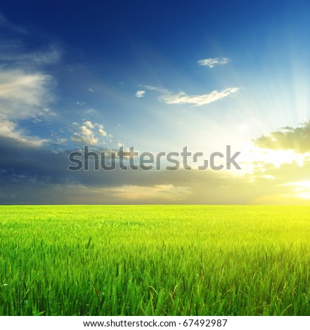 Green meadow. Composition of nature. - stock photo