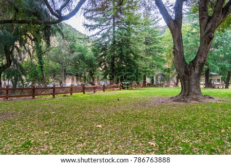 Green meadow covered in fallen leaves, Alum Rock Park, San Jose, Santa Clara county, California