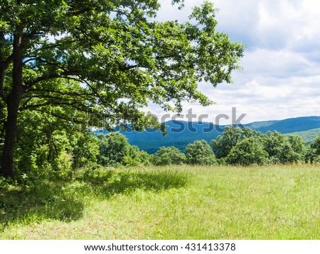 green meadow in Bulgarian Strandzha mountain, Bulgaria - stock photo