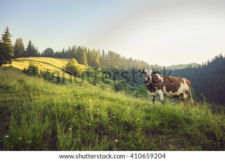 Green meadow in mountains and cows, summer landscape. Retro color. - stock photo