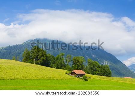 Green Meadow in Swiss alp, Switzerland Interlaken - Lauterbrunnen  - stock photo