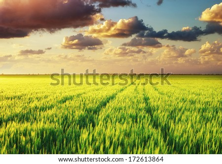 Green meadow. Nature composition.