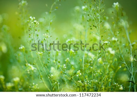 green meadow on a sunny day