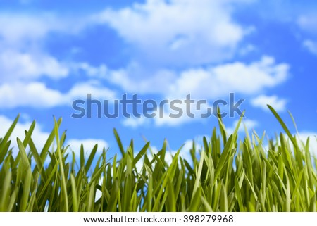 Green meadow on blue sky background - stock photo