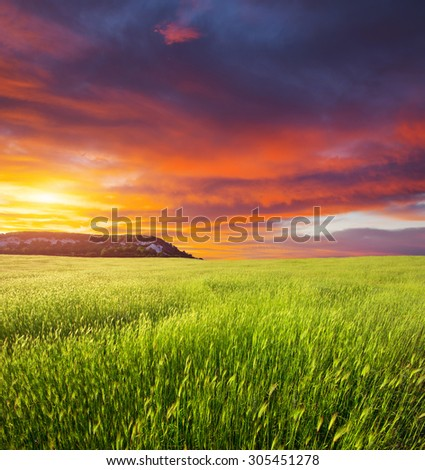 Green meadow on the sunset. Composition of nature. - stock photo