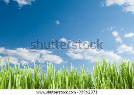 Green meadow over blue sky - stock photo