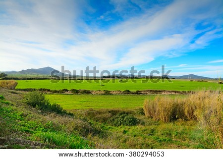 green meadow under a blue sky in Sardinia, Italy