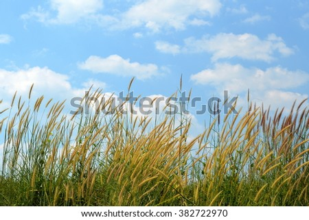 Green meadow under blue sky with clouds - stock photo
