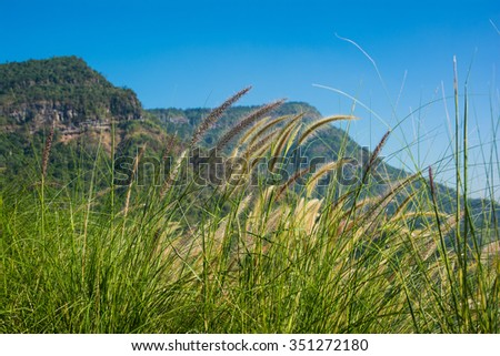 Green meadow under blue sky with mountain. - stock photo