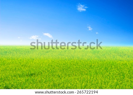 Green meadow under bright Sky - stock photo