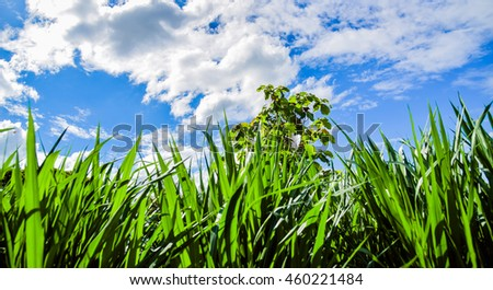 Green meadow with blue sky and clouds. - stock photo