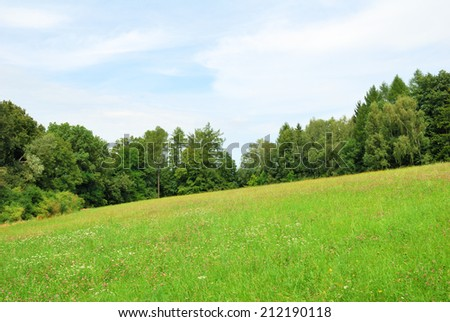Green meadow with wild flowers and forest trees behind - stock photo