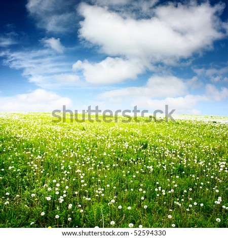 Green meadow with wild herbs and blue sky with fluffy clouds