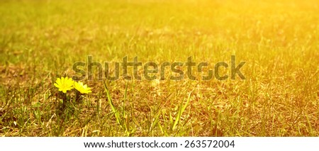 Green meadow with yellow flowers under blue sky with clouds - stock photo