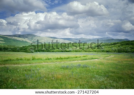 green meadows \ green meadows photo cells on a sunny summer day Crimea - stock photo