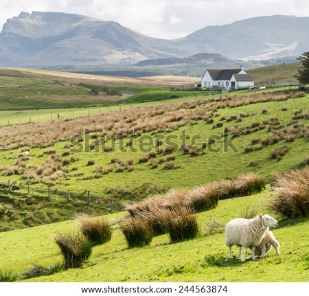 Green meadows with sheep and white cottage in the background on the Isle od Skye, Highlands, Scotland - stock photo