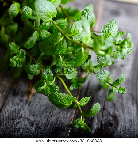 Green melissa peppermint herb leafs from home garden on old wood background. Perfect for mint tea . - stock photo