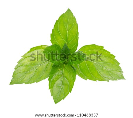 Green mint isolated on a white background