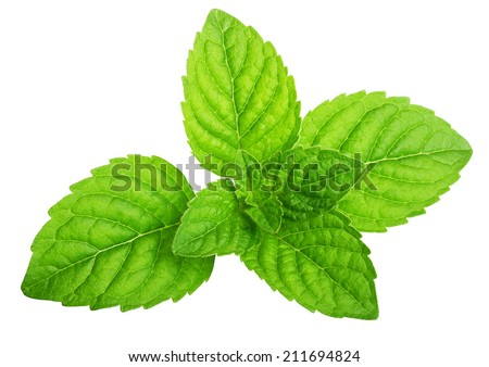 Green mint leaves isolated on a white background. - stock photo