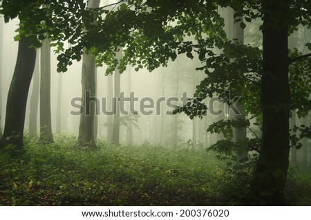 green misty forest with leaves - stock photo