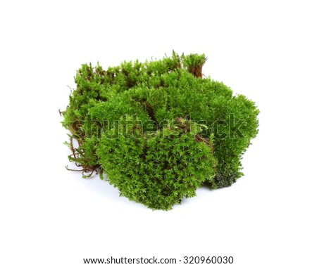 green mos isolate on white background - stock photo