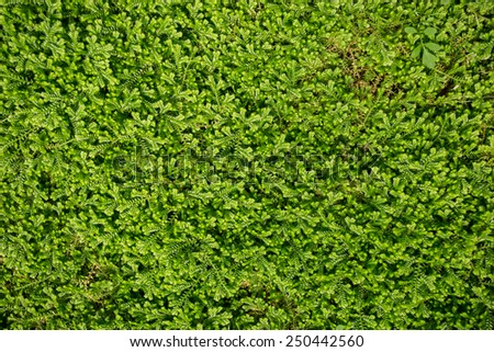 Green moss background close up - stock photo