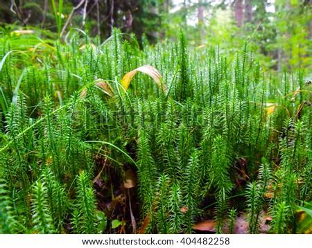 Green moss close up - stock photo