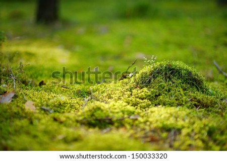 Green moss close-up in the forest - stock photo