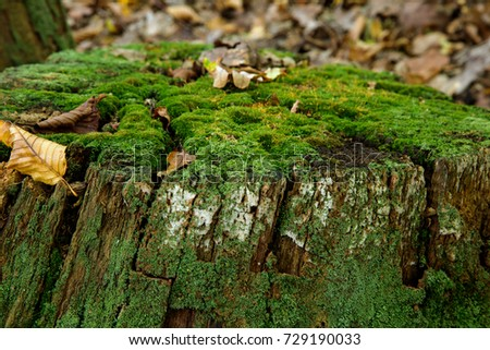 Green moss covered tree stump in a forest