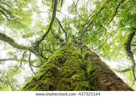 Green moss covered tree trunk