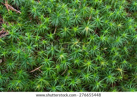 Green moss for texture background  - stock photo