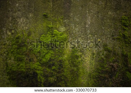 Green moss, grunge texture, background
