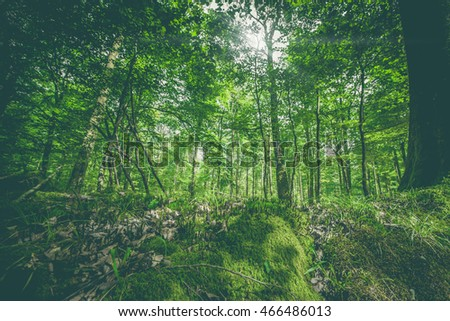 Green moss in a forest in the spring