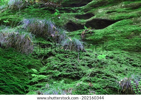 green moss in the forest as a background - stock photo
