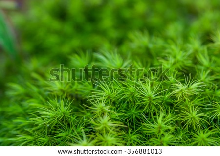 Green moss in the forest. - selective focus