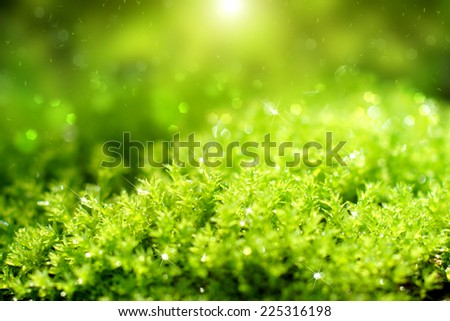 Green moss in the morning light. - stock photo