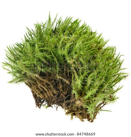 green moss   isolated  on white - stock photo